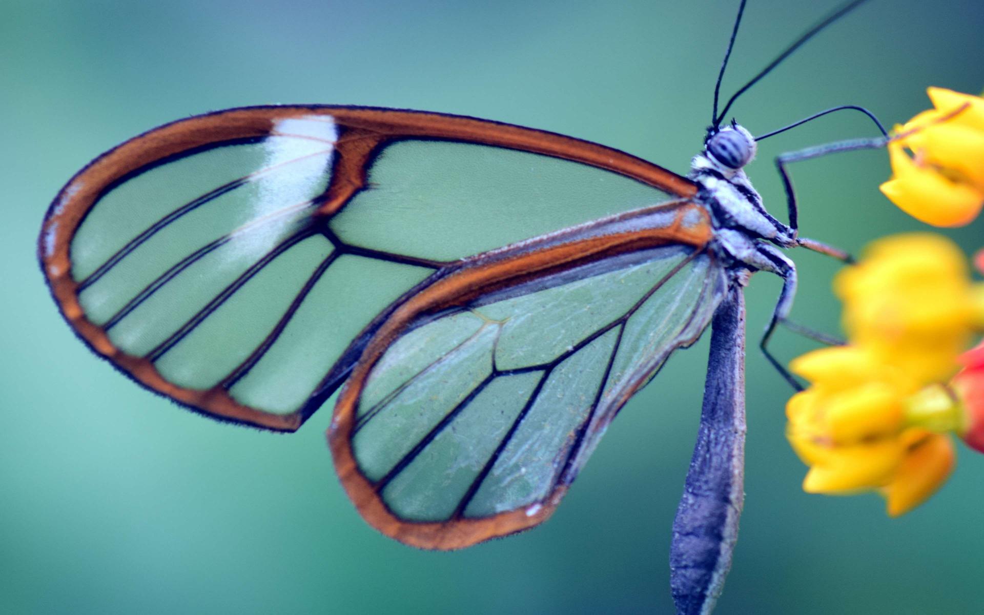 Lepidopteres.jpg